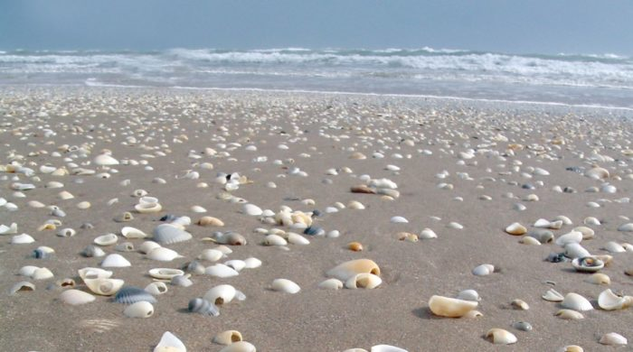 san jose island beach texas
