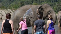 Bathe with the Elephants