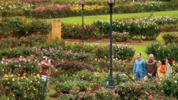 Things to do in tyler texas